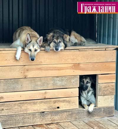 Понедельник в приюте «Славянское»: всё убрано,  собаки выгуляны и накормлены.  Помогли новые волонтёры. Спасибо!